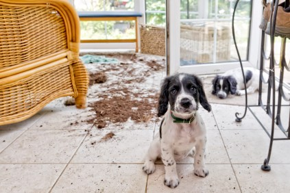A dog that made a huge mess from bad behavior